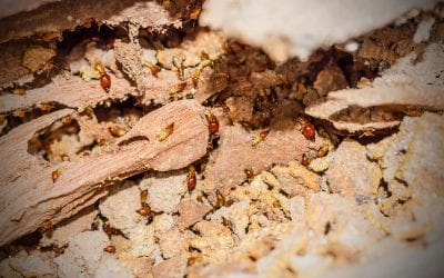 Tips to Prevent Termites in the Home
